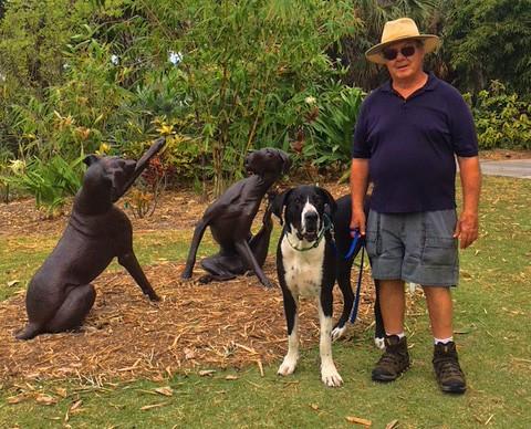 Meet Duncan The Great Dane: Naples' Favorite Resort Pet